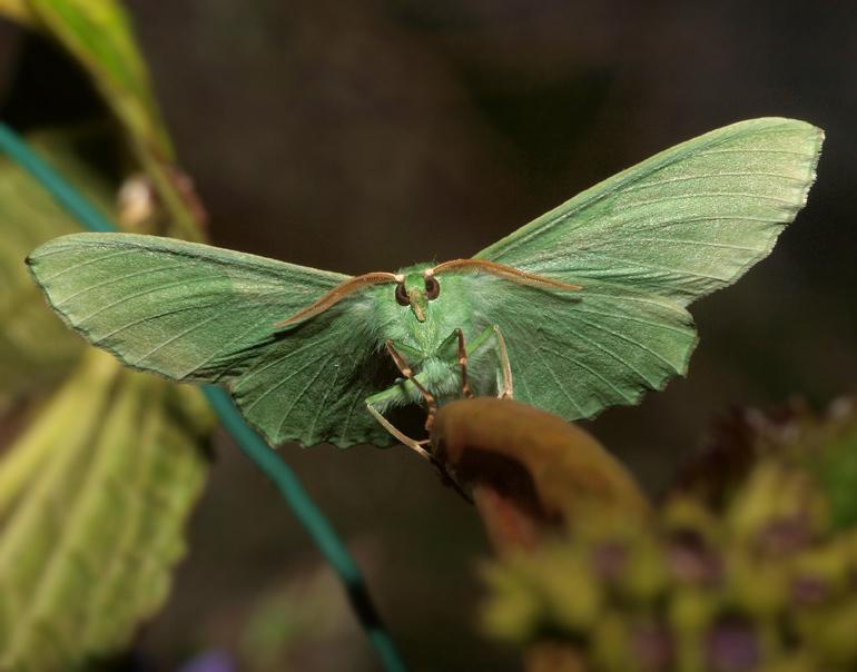 P7027971g-grøn-birkemåler